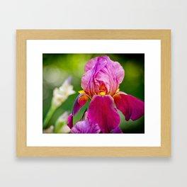 Hot Pink Iris Framed Art Print