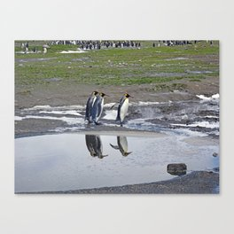 More King Penguin Reflections Canvas Print
