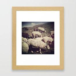 Mouton Framed Art Print