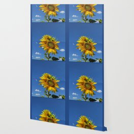 big sunflower shines yellow against a blue sky with white clouds Wallpaper