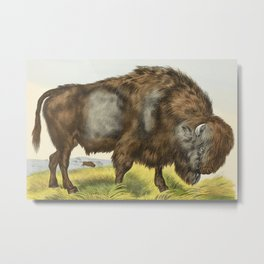 Vintage Bison Illustration Metal Print