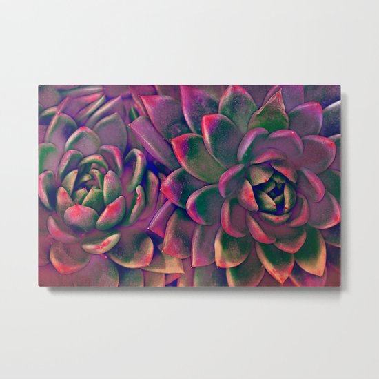 Green & violet succulent Metal Print