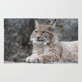 Young lynx portrait Rug