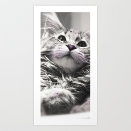 cut kitten - chat calin Art Print