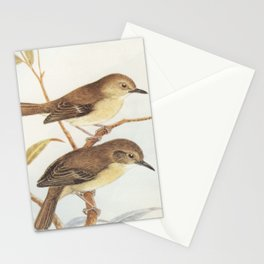 Neville W. Cayley - What Bird Is That? (1931) - Large-billed scrubwren Stationery Cards