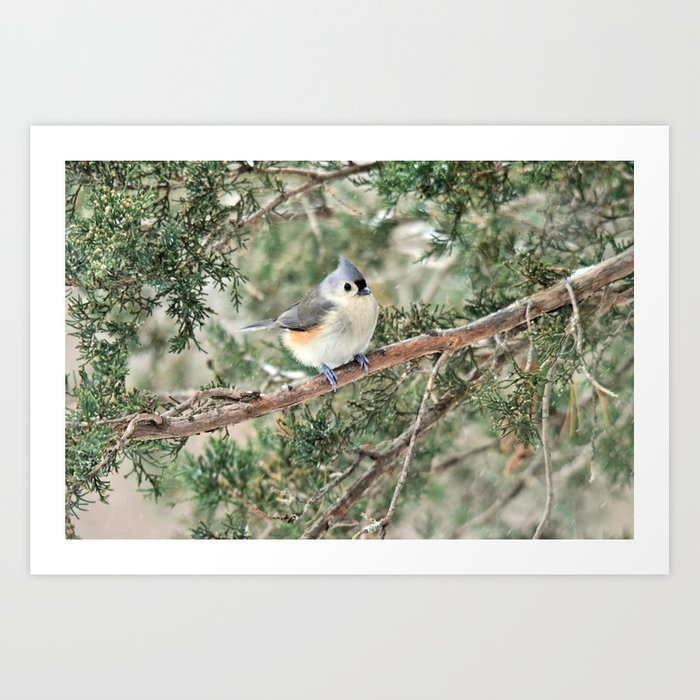 Tiny Titmouse Art Print