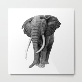 Bull elephant - Drawing in pencil Metal Print
