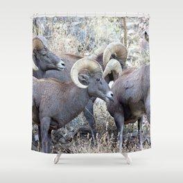 Watercolor Bighorn Ram 42 Shower Curtain