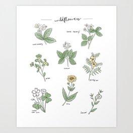 Wildflower Guide Illustration Art Print