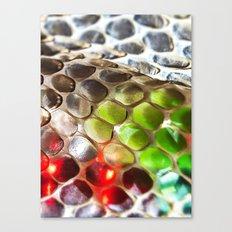 Snakeskin & Beads Canvas Print