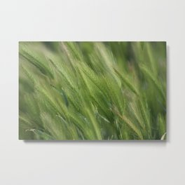 Hayseed Heads Wild Grass Utah in Rainforest Green Metal Print