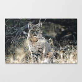 Ghost of the Forest Canvas Print