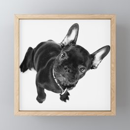 Bulldog Framed Mini Art Print