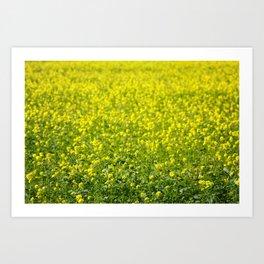 Yellow Mustard Seed Field Art Print