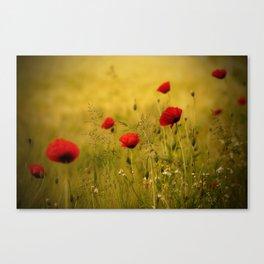 Poppy-field Poppies Flowers Flower Canvas Print