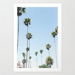 St. Pete Tall Palms Art Print