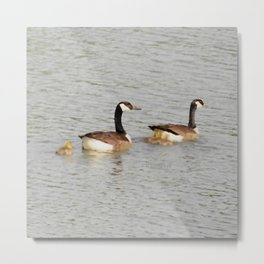 Canadian Geese Family Metal Print