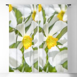 White Daffodils Blackout Curtain