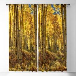 Autumn Aspen Forest in Aspen Colorado USA Blackout Curtain