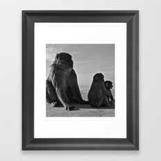 Gibraltar Monkey Framed Art Print