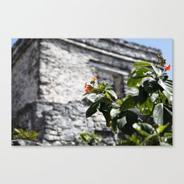 Touch of color in Tulum Canvas Print
