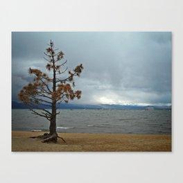 Shore Pine Redux Canvas Print