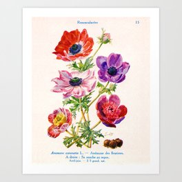 J Eudes - Anemone coronaria - vintage botanical print Art Print