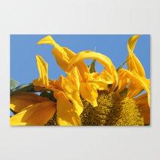 Sunny Morning Canvas Print