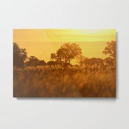 Okavango Delta Metal Print