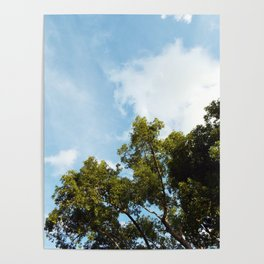 Trees in the Sky Poster