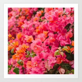 California Blooms XIII Art Print
