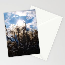Pampas grass in the sunshine. Stationery Cards