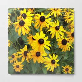 Black Eyed Susan Mob Metal Print