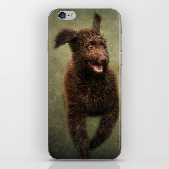 I am not a Muppet...I am a Labradoodle!!!! iPhone Skin