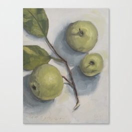 windfall apples Canvas Print