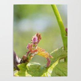 vine shoots Poster