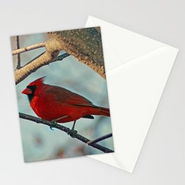 Pretty Male Cardinal Stationery Cards