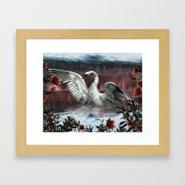 Landing Swan Framed Art Print