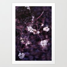Small treasures Art Print