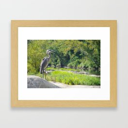 James River Park System- Blue Herons Framed Art Print