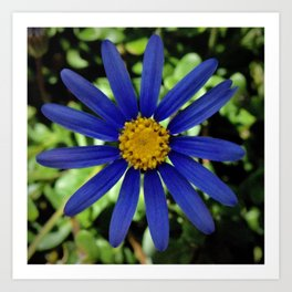 Bright Blue Daisy Art Print