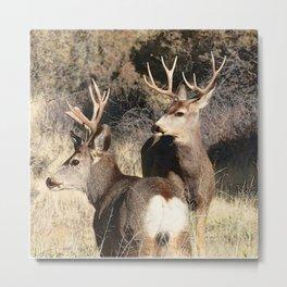 Watercolor Deer, Mule 16, Crestone, Colorado, The Disturbance Metal Print