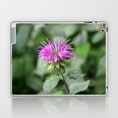 Monarda - Bee Balm Laptop & iPad Skin
