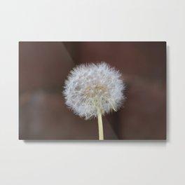 Lion's-tooth - beautiful weed Metal Print
