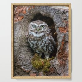 Owl in a tree hole Serving Tray