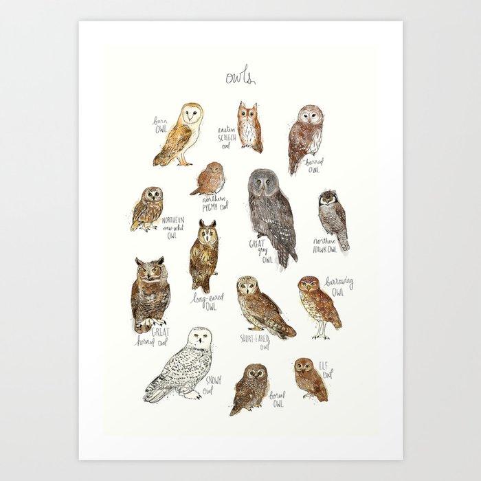 Owls Kunstdrucke