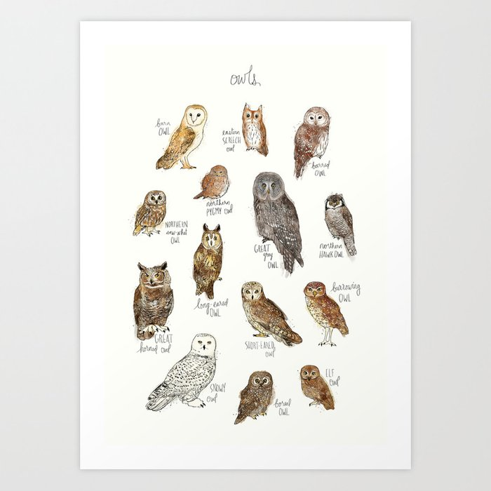 Discover the motif OWLS by Amy Hamilton as a print at TOPPOSTER