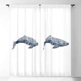 Mexico Grey whale Blackout Curtain