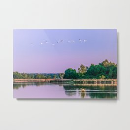 Swans are flying Metal Print