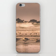 Ocean Beach - Seagulls near Oregon Sea iPhone & iPod Skin